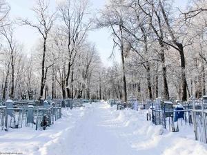 На нижегородских кладбищах спилят сотню аварийных деревьев