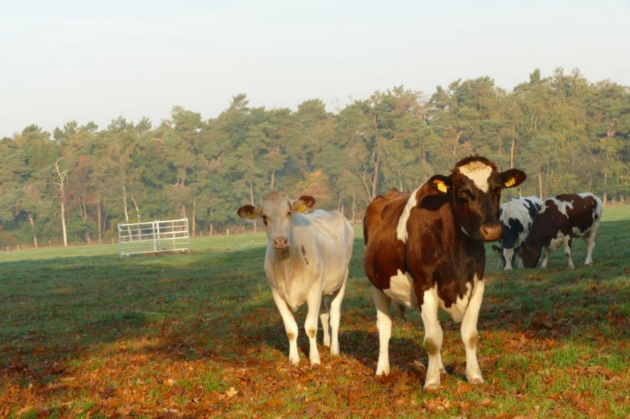 Эти животные вредят окружающей среде не меньше человека - фото 1