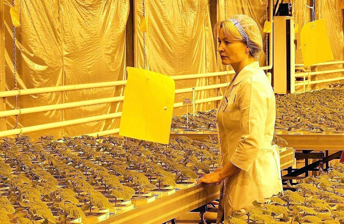 На Бору построят крупнейший тепличный комплекс - фото 1