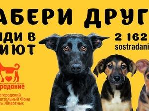 Нижегородцев приглашают принять участие в создании социальной рекламы