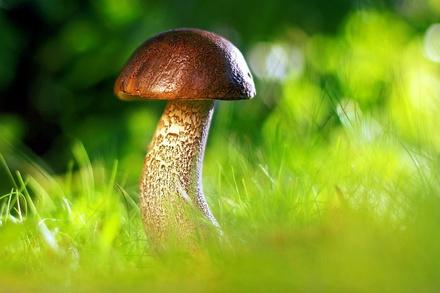 Миколог рассказал о раннем грибном сезоне