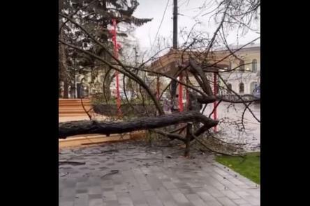 Дерево упало в благоустроенном сквере им. Свердлова в Нижнем Новгороде