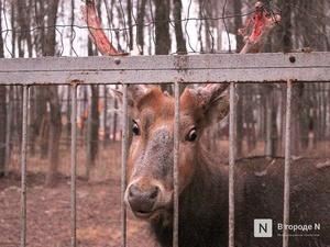 Чем живет «Мишутка»: репортаж из закрытого нижегородского зоопарка