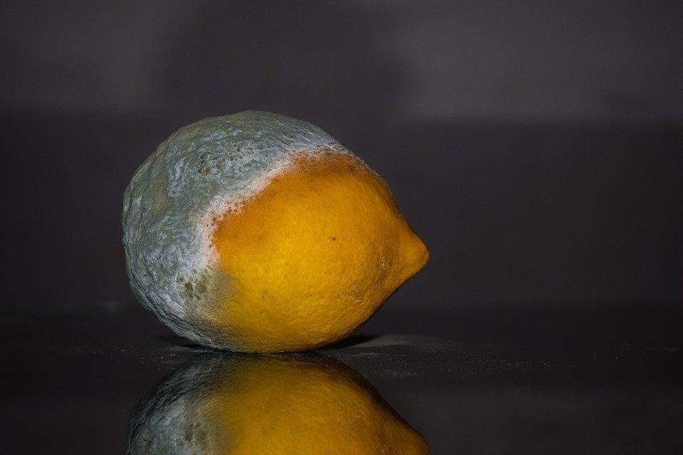 Что будет с организмом, если съесть заплесневелый продукт? - фото 1