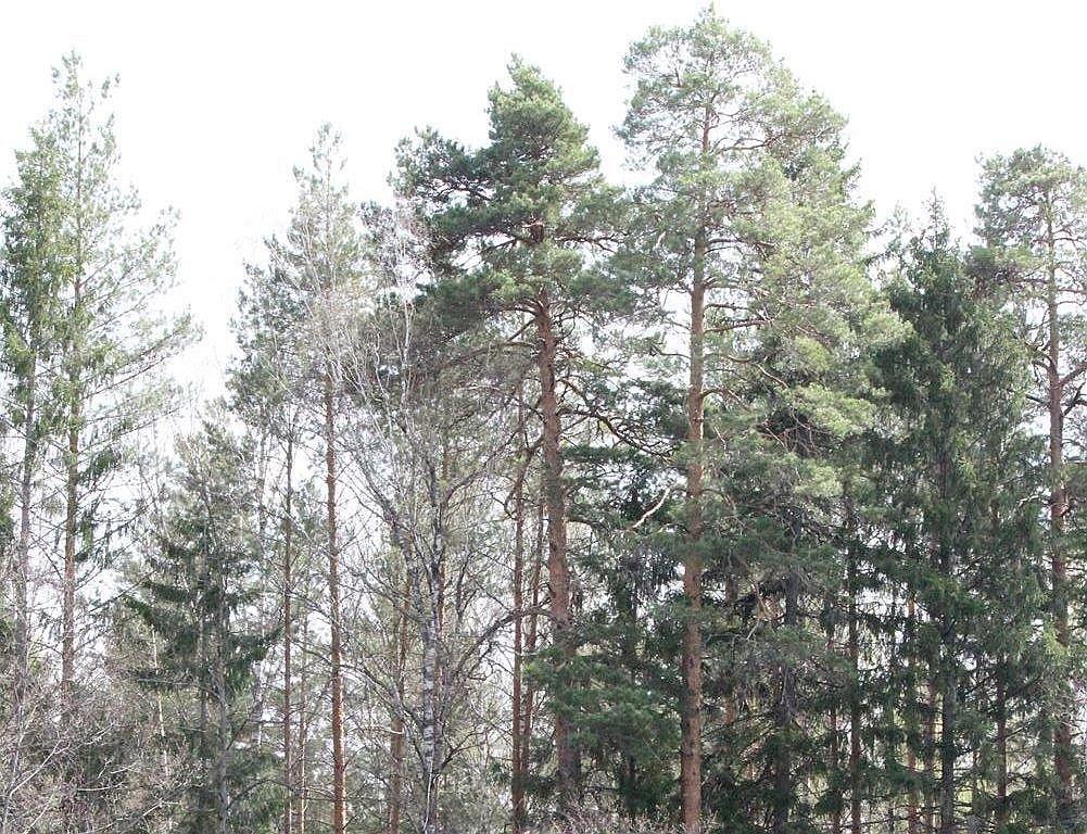 Нижегородские лесники получили почти сотню единиц техники