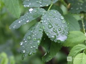 Пасмурную и дождливую погоду принесет нижегородцам первая неделя лета