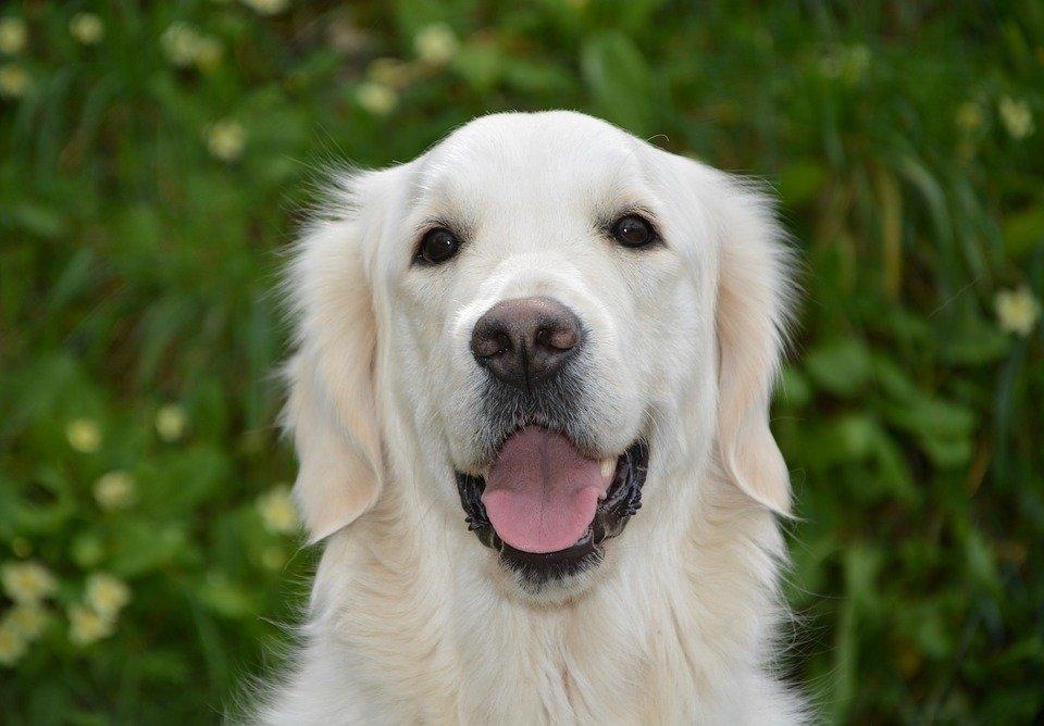 Почему нельзя «целоваться» даже с собственной собакой - фото 1