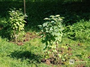 Размеры озелененных территорий в Нижнем Новгороде увеличатся
