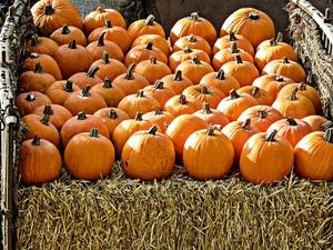 Главный символ Хэллоуина и карета для Золушки: выбираем правильную тыкву