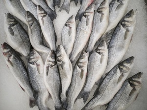 На 75 тонн увеличилось производство рыбы в Нижегородской области