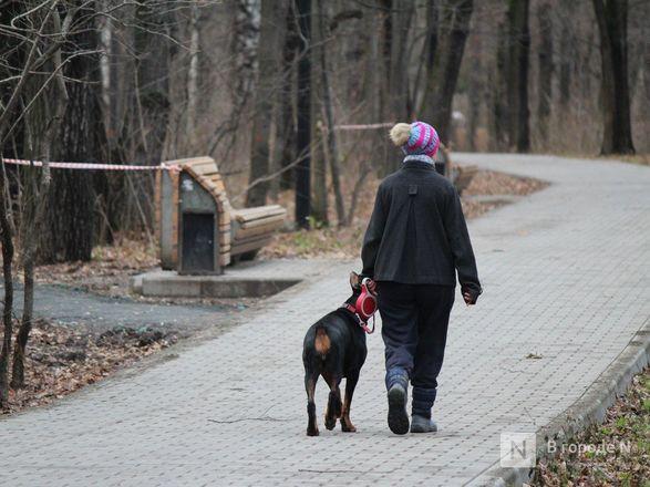 Уникальная площадка и тропинки для собак появились в нижегородском парке «Дубки» - фото 5