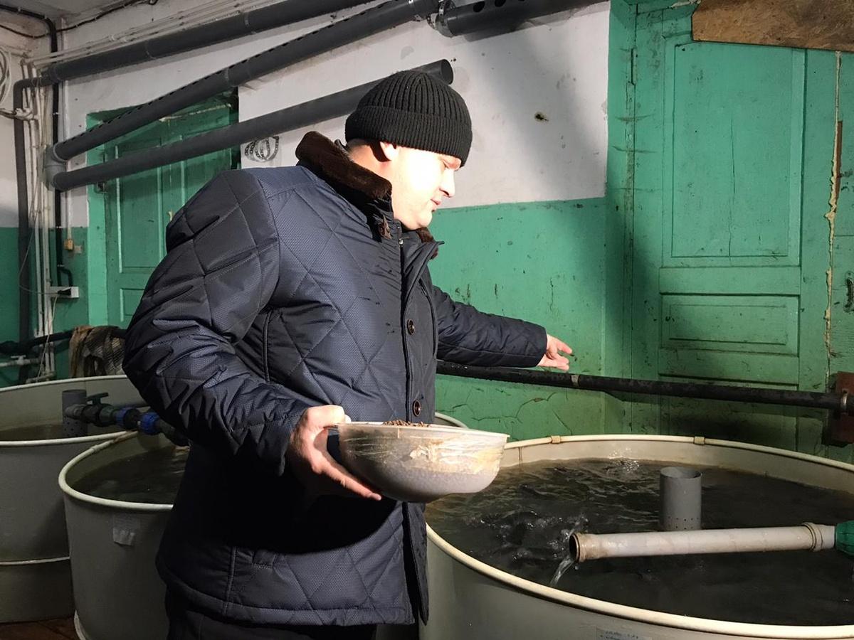 Африканского мраморного сома выращивают в Шатковском районе - фото 1