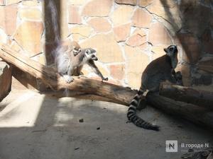 Нижегородский зоопарк «Мадагаскар» получил субсидию на корм для животных